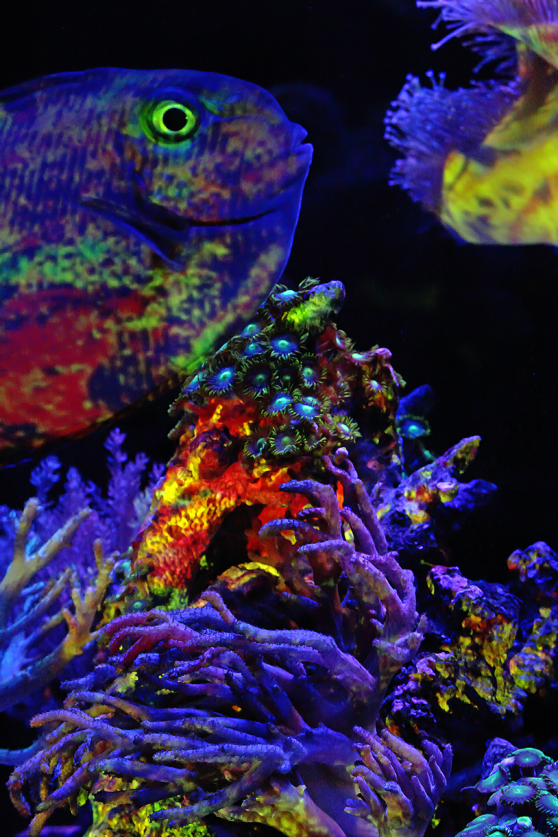 """""""Illuminating Life_ Aquascaping the Ecosphere"""" by [dNASAb]"""