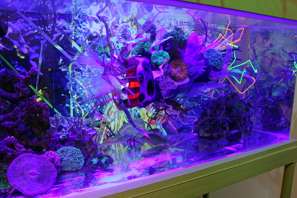 "[A Re-Contextualization of the living marine reef ecosystem] 40 gallon custom acrylic aquarium,pumps, filters, actinic lights, resin,fiber optics,acrylic, reclaimed plastics, led's,thermal formed plastics, archival imaged plastics, 40 living corals,fish, shrimp, invertebrates, algae,1080p HD video with original audio track. 36 (w) X 92"" (h) x 24 inches"