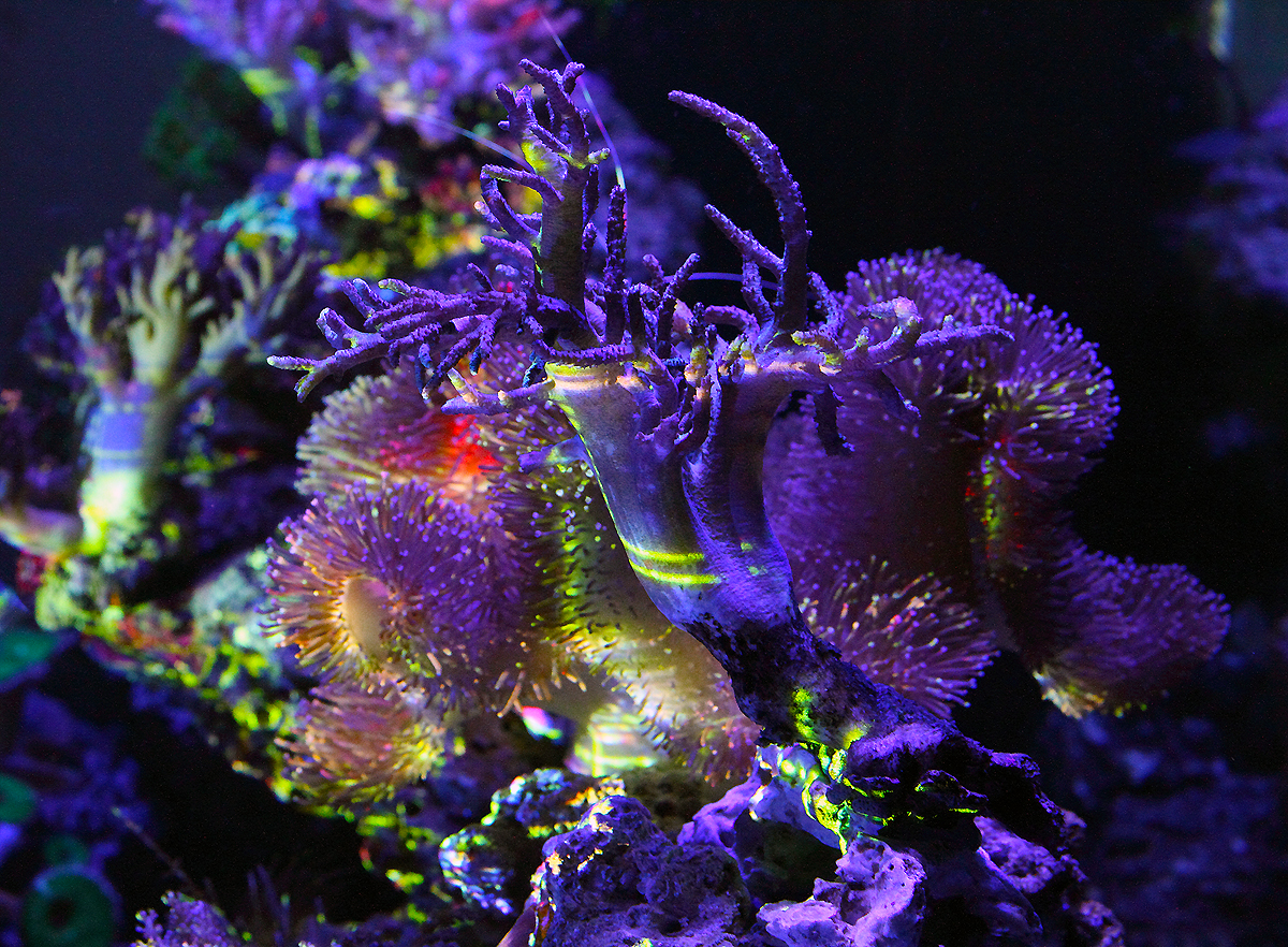 """""""Illuminated Aquascape_A Re-Contextualization of the living marine reef ecosystem"""" 2014 Archival pigment print on Acrylic, edition of 7, 60"""" x 44"""""""