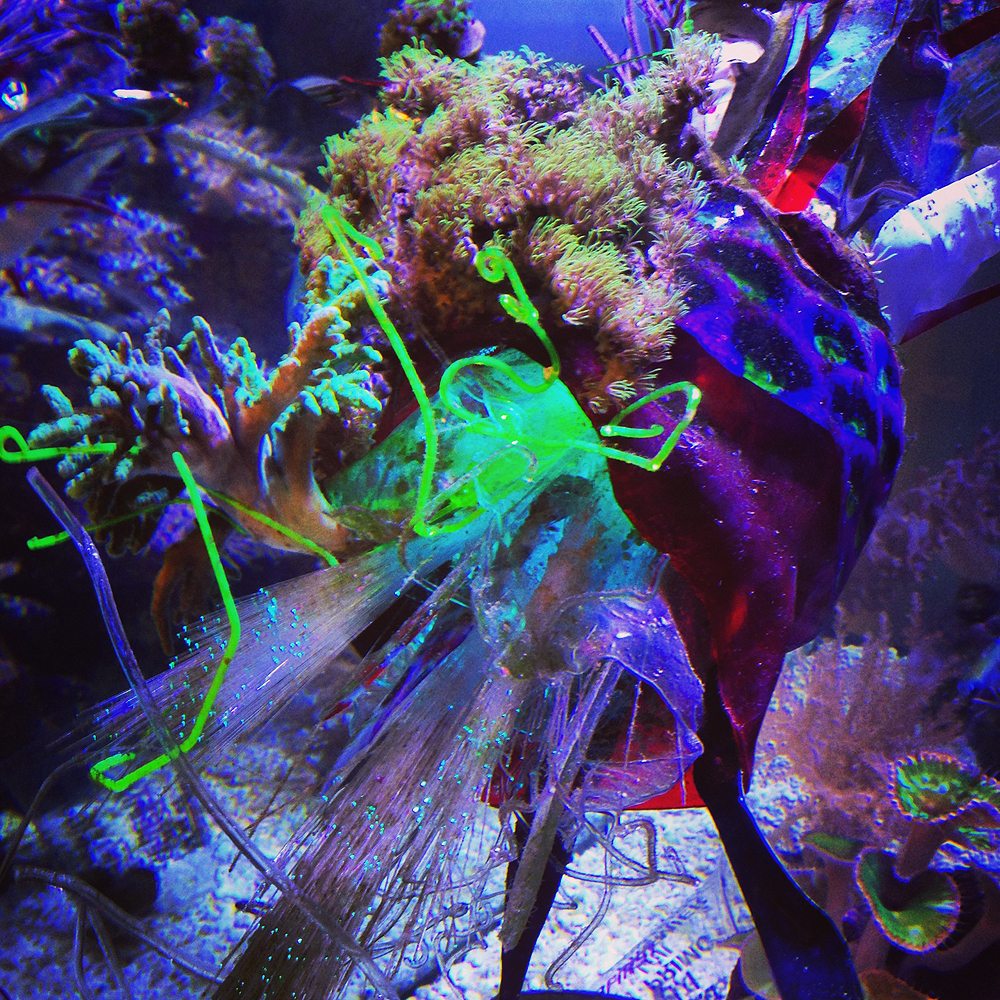 """Prototype/Materials Test for """"Sculpting Life, A re-contextualization of the living marine reef ecosystem"""""""